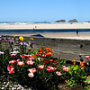 flowers at the beach<br /> It was so beautiful down in Cannon Beach on Saturday..The sky was blue as was the water..Kites, horses, seagulls, and many people were all out enjoying the day..