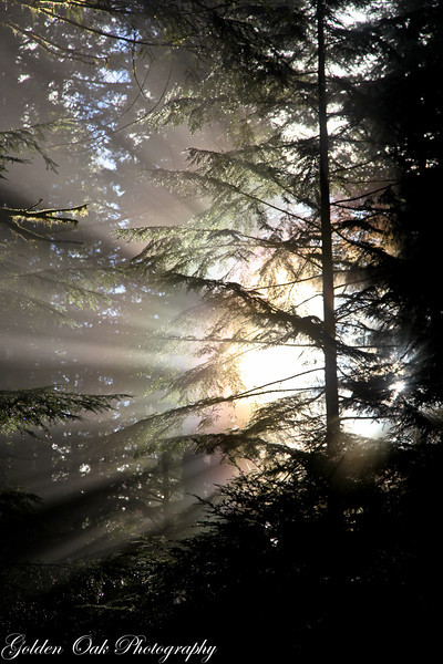 Love this misty forest rainbow!