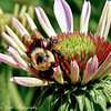"""Life in the Bee Zone""Looking forward to spring already..and it's not even winter yet..happpy time change everyone!<br /> Best viewed in larger sizes"