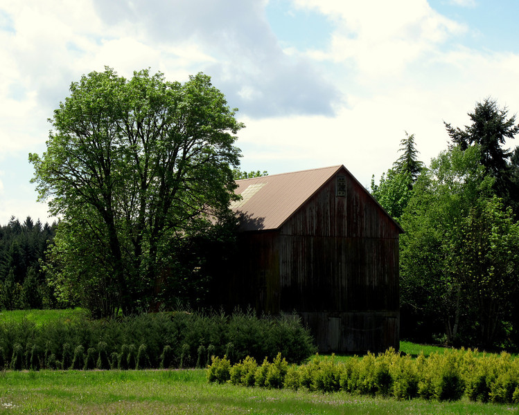 The old barn sitting in the sun as it has done for many years.<br /> Yes, we do get sun in Oregon every once in awhile. :)