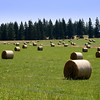 Happy Birthday Dan!<br /> It's haying time..love the patterns formed by the rolled hay in the field..can you believe this is 25 minutes from downtown Portland? Oregon produces the most grass seed in the world..too bad I'm allergic!