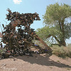 The Zion National Park shoe tree resembles the real thing on the edge of Springdale, UT.<br /> Lot's of shoeless peeps out there!
