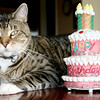 Happy Birthday to the October Scorpio's, Scott & Nolan...<br /> Snickers didn't eat too much of your cake!