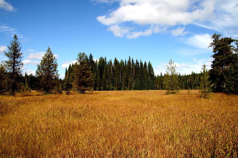 A swampy meadow near Little Crater Lake showing its fall golden color.