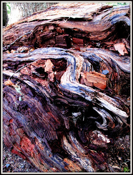 Looking more like abstract art this tree tells its life story of floods, snow, termites..what can you see?