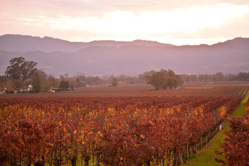 A beautiful evening along the Silverado Trail in California's wine country. Here it is still fall as the grapevines show the beautiful red color..