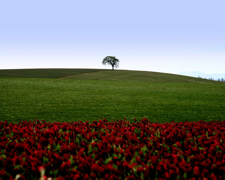 "This single oak tree on a ridge overlooking the fields of grass and red clover on a beautiful, Sunny spring day...<br /> ""Perspective"""