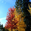 Beautiful colors of fall..Sunriver Oregon on a most gorgeous day!