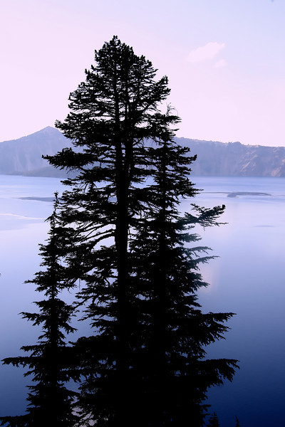 This tree silhouette offers a calm view of a very violent landscape at Crater Lake. Mt Mazama was the largest volcanic explosion in North America according to some scientists...Good thing none of us was there for that day...
