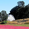 Pink larkspur flowers surround this barn among an Oregon Oak studded hillside,