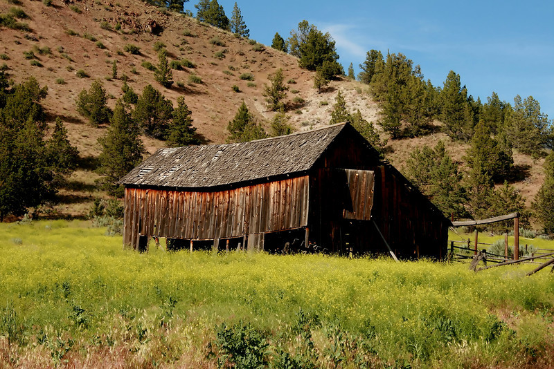 Oregon seems to have a plethora of ancient barns that seem to be in a state of perpetual collapse. Here's one out in eastern Oregon that is a bit swayback. How many more winters until it's a pile of wood?