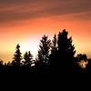 """Autumn Nights""<br /> As the sun is setting on a cool autumn evening, in the Oregon High desert the trees are silhouetted and the sky is aglow.....love the way the high clouds reflected the glow/"