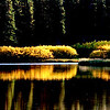 Quiet, stil and calming as the afternoon sun turns the bushes by this lake a brilliant golden color.<br /> Taken in central Oregon near Mt Batchelor