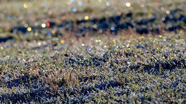 12/30/12  Prismatic Bokeh  are you missing Christmas already?  here are some more Christmas lights in frozen grass as the sunlight is refracted by ice crystals ... this was taken before the snow fell, but I will get out on a snow hike today or tomorrow to see what I can find to shoot ... after shoveling snow and ice for four hours yesterday I am a little bit sore this morning after using muscles I forgot I had! ... thanks again for your comments and critiques.