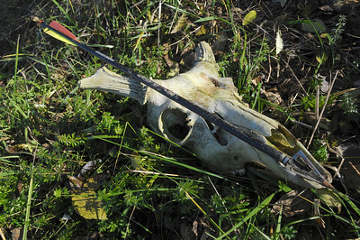 11/25/12  Found during a Hike  First I found the crossbow bolt, then a little while later I found the skull.  After checking online I found out crossbows are allowed during the archery season for hunting deer, at least in Ohio.