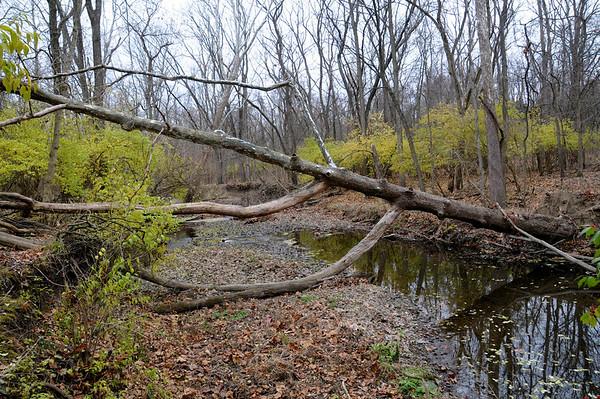 11/27/12  Woodland Stream Needs Rain