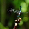 Dragonfly - from the archives