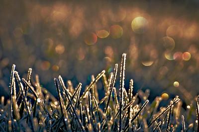 12/22/12  Christmas Lights in Frozen Fescue