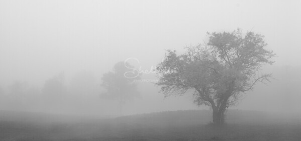 Appless Fog