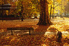 Parc du Contades' Autumn, Strasbourg, France