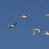 Freitag Vögel 2013-05-0390