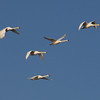 Freitag Vögel 2013-05-0387