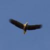 Freitag Vögel 2013-05-03135