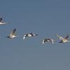 Freitag Vögel 2013-05-0372