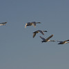 Freitag Vögel 2013-05-0377