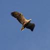 Freitag Vögel 2013-05-03139