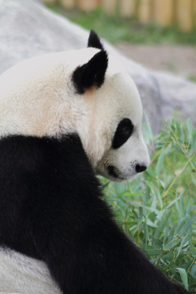 Toronto Zoo 2013
