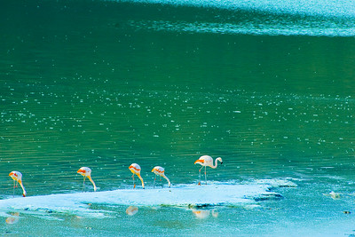 TDP 034 - Torres del Paine, Flamingos on lake
