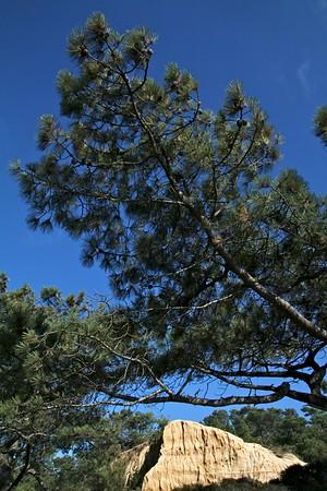 Torrey Pines 13
