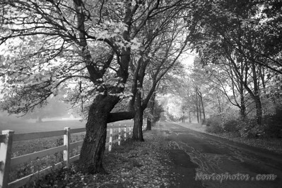 At the peak of Fall colors, b&w still manages to evoke a magical charm - pause and let your gaze take in the trees alongside the road as it vanishes in the distance