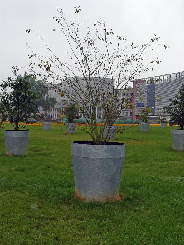 2005-09-11_06258 ausgewachsene Blumentöpfe grown-up plantpots