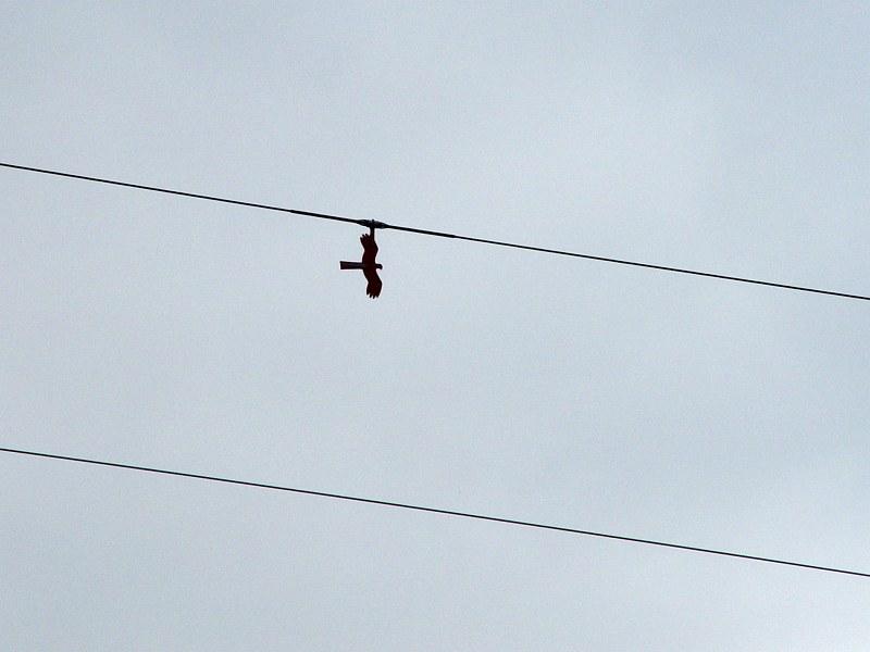 2005-09-13_06321 diese Pappvögel hingen an den Hochspannungsmasten in Lichtenfels these cardboard birds hung on the high-voltage power lines in Lichtenfels