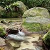 Daintree Forest - Mossman Gorge