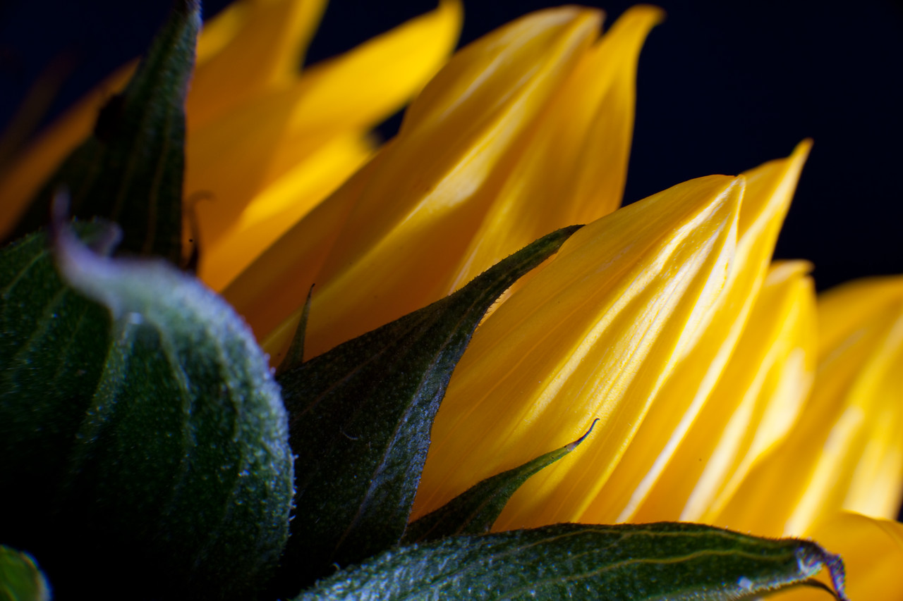 Intimate Scenes of Nature:  Contrasty, bold yellow color...