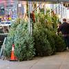 Guarding Xmas Trees, NYC