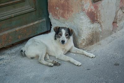 Stray Dog, Sibiu