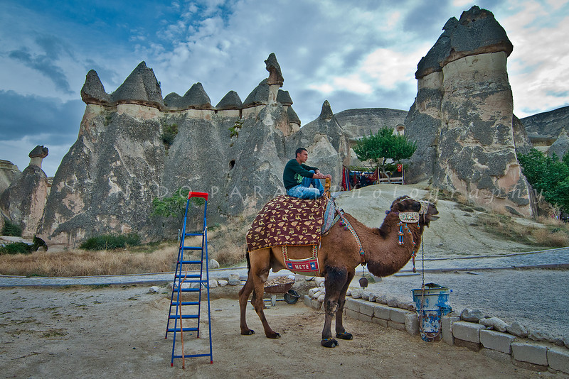 Camel Stand, Urgup, Cappadocia