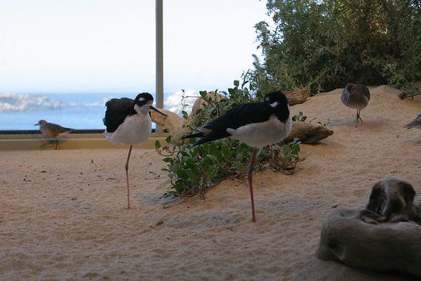 As we walk around the aquarium, we see...birds