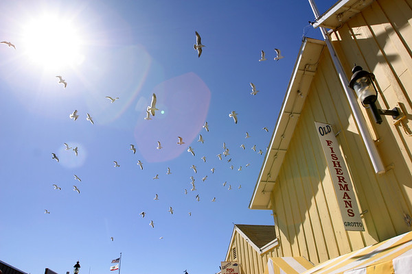 Trust me...it is NEVER a good idea to stand under a flock of seagulls