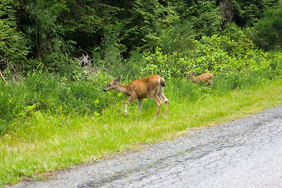 As we drive to Ojiichan's place, a deer and her fawn cross the road
