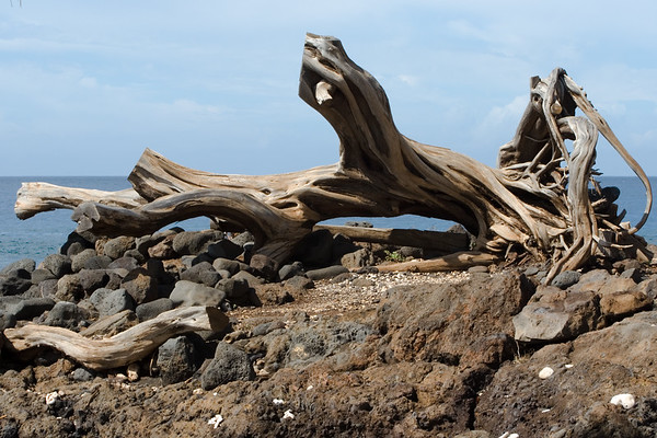 This piece of driftwood reminds me of one of my ojiichan's paintings