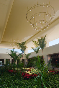 Are those poinsettias in the Waikoloa Beach Marriott's lobby?