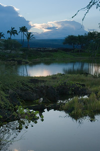 A bird overlooks the anchialine ponds between the Marriott and Waikoloa Beach
