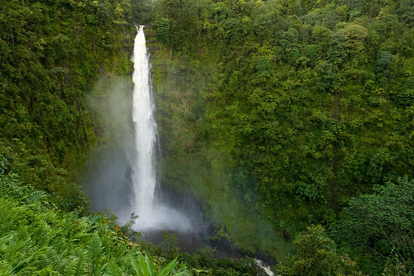 When we reach Akaka Falls, we are stunned by how different it looks from three days ago