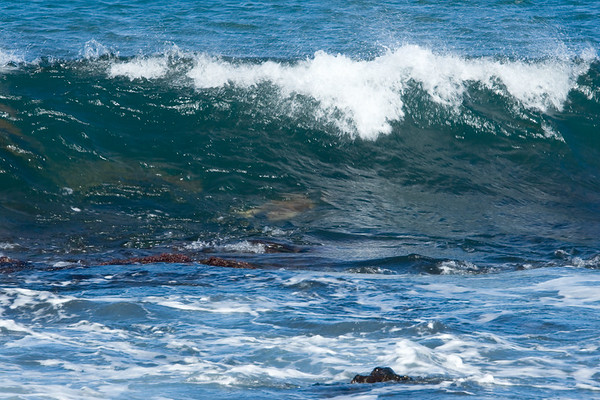 The greenish-brown masses within the cresting waves are more sea turtles