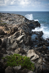 "In a previous visit to the hotel, a tourist asked me how to get to the ""Dragon's Teeth"".  I had no idea what she was asking about, so, this trip, I find out it is located on Makalua-puna Point...just a short walk down the hill from the hotel."